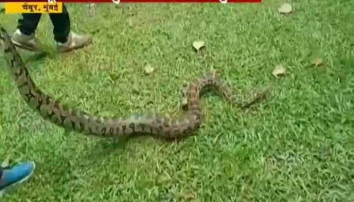 Mumbai Chembur Snake Catcher Caught 7 Ft 15 Kg Python