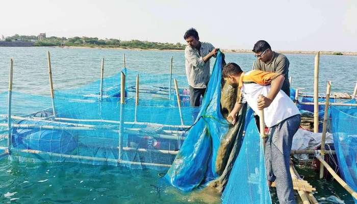 महाराष्ट्राच्या सागरी सीमेत परप्रांतीय बोटींची घुसखोरी